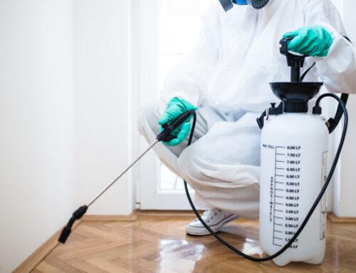 شركة مكافحة حشرات في ابوظبي |0543331609 | مكافحة الذنابير
