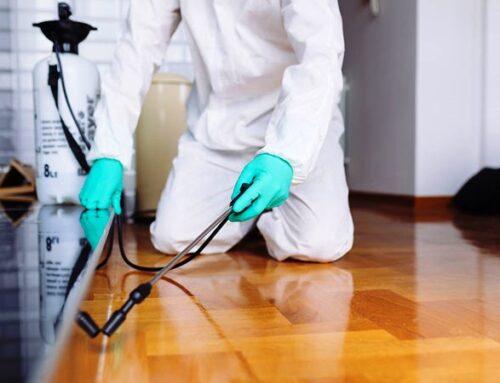 شركة مكافحة حشرات في الشارقة |0543331609 |ابادة الحشرات
