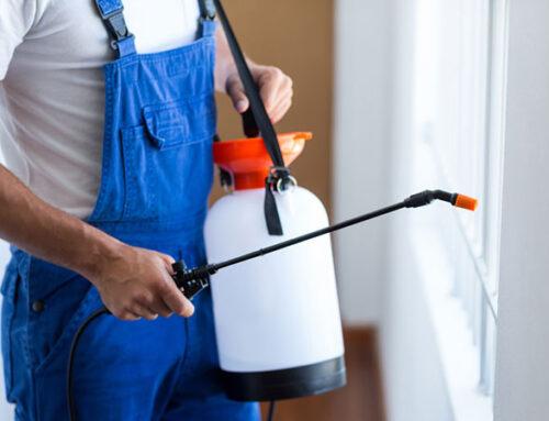 شركة مكافحة حشرات في راس الخيمة |0543331609 |ماكينة تعفير للآفات
