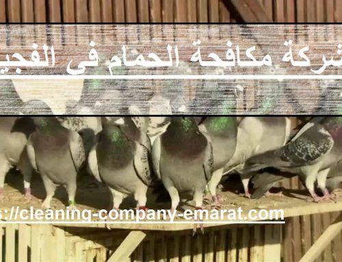 شركة مكافحة الحمام في الفجيرة |0543331609 |تركيب طارد للحمام